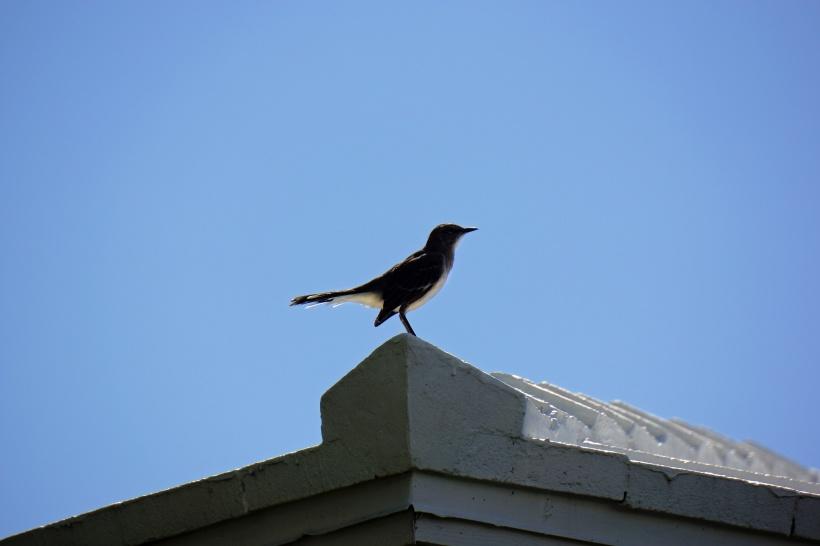 DSC07971-BIRD-HOME.jpg